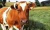 Литва пожалуется в ВТО, если Россия не снимет запрет на молочную продукцию