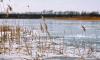 В Саратовской области дети нашли вмерзшее в лед тело новорожденного ребенка
