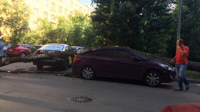 """Дерево обрушилось на """"Солярис"""" во дворе дома на Ленинском проспекте"""