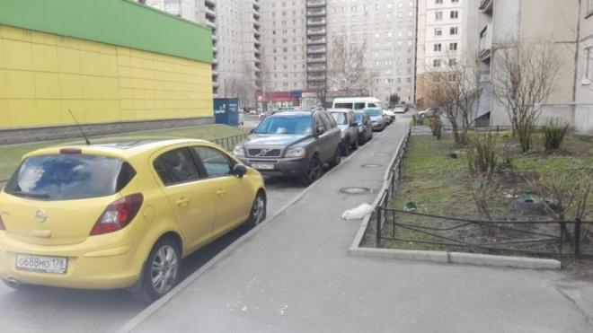 В Петербурге будут судить живодера, который с особой жестокостью убил шпица