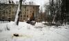 На 2-ом Муринском проспекте одинокая активистка не дает рабочим сносить дерево