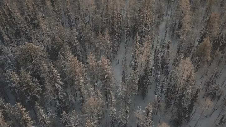 """Суд обязал ЗАО """"Фиро-О"""" очистить земли лесного фонда от захламленных бытовых отходов"""