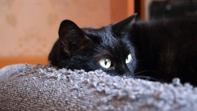 На Каменноостровском живодер расстрелял около десяти кошек и котят