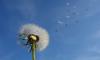 В среду петербуржцев будет сдувать сильный ветер