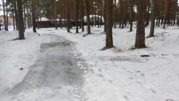 Жители Сясьстроя Ленобласти опасаются незаконной вырубки...