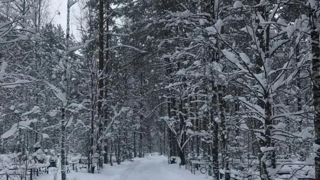 В четверг по Петербургу ударят морозы до минус 20 градусов
