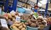 Россельхознадзор выявил 77 тонн зараженного белорусского картофеля