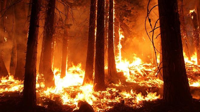 В Югре бушуют лесные пожары на площади 100 га