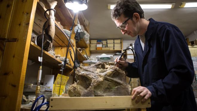 Петербургские ученые рассказали, как нашли в Сибири крестец нового динозавра