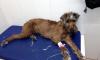 В Петербурге нашли пропавшую после взрыва на Народного Ополчения собаку