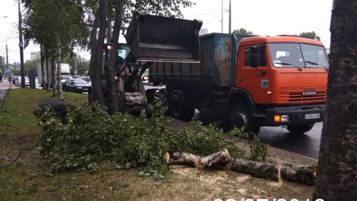 Дорожники оперативно ликвидируют с дорог и тротуаров упавшие от ветра деревья