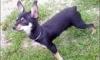 Российская семья предлагает 10 тысяч евро за пропавшую в Италии собаку