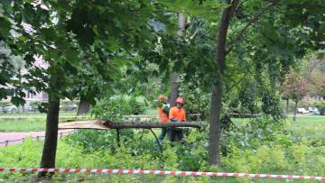 Дорожники и садовники формируют аварийные бригады в ожидании шторма