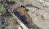 В Батуми из водопроводных кранов пошла нефть