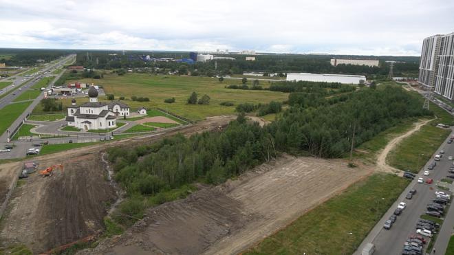Власти объяснили вырубку леса под парковку на Парашютной улице в Петербурге
