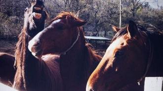 По Санкт-Петербургу носится табун лошадей