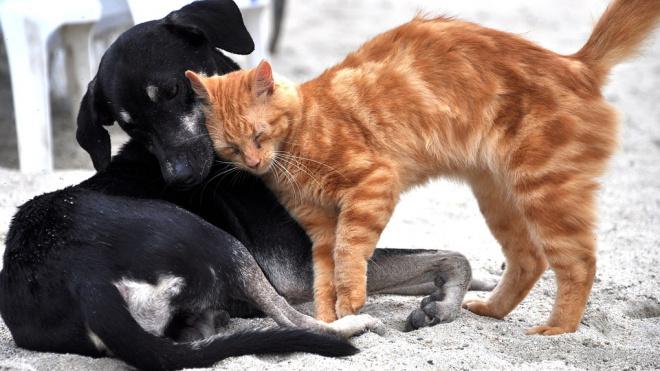На Гарькавого петербуржцы нашли пакет с изрубленными котами и собаками