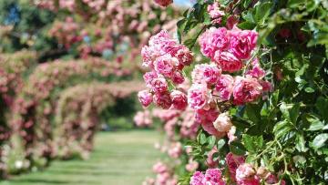 Садовники подготавливают цветники к летнему сезону