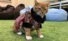 Пользователи социальных сетей выбрали коту Филимону наряд для выхода в свет