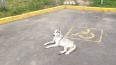 Около входа в Юнтоловский заказник нашли бездомного пса
