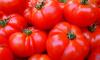 В Петербург не пустили 200 тонн зараженных томатов из Марокко