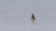 Краснокнижную птицу заметили в Ленобласти