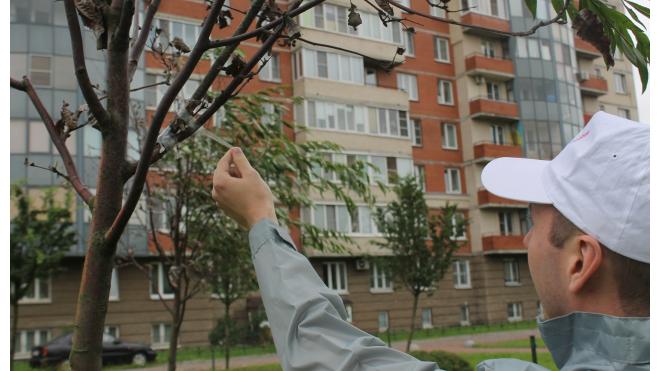 Коммунальщики озеленили сад на Бабушкина, примотав скотчем зеленые ветки к высохшим рябинам