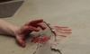 В Москве религиозный фанатик зарезал мать и двух своих детей
