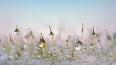 В Петербурге ожидается мокрый снег и гололед