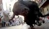 Турист погиб во время забега быков в Испании