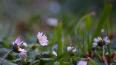 В Ботаническом саду Петербурга распустились первоцветы