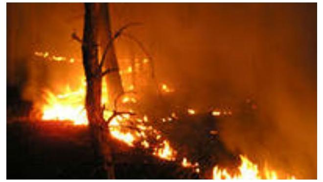 В Забайкалье вынесли приговор женщине, виновной в лесном пожаре