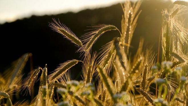 Эксперты прокомментировали сложности с отправкой грузов у экспортеров зерна