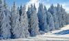 В Петербурге на Рождество будут снег и морозы