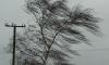 МЧС: в Ленобласти будет очень ветрено