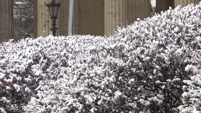 После потепления в четверг Петербург ждет снег и сильный ветер