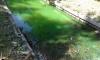 """В """"Автово"""" Красненькая речка стала ядовито-зеленого цвета"""