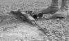 Мир удивлен предложением России прекратить огонь в Сирии 1 марта