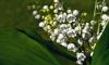 Как в Ленобласти будет происходить снятие ограничений после майских праздников