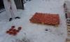В Петербурге отправили в топку 4,5 тонны незаконно добытой красной икры