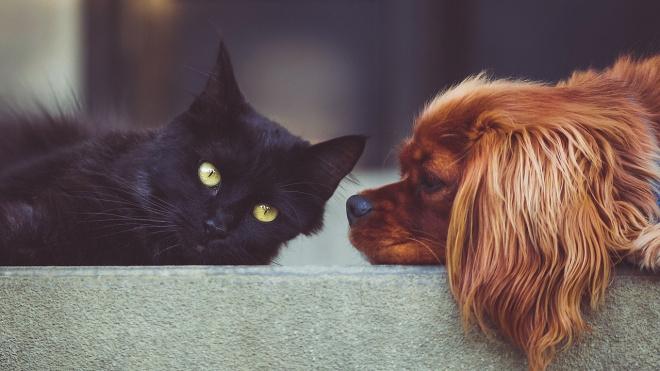 Ученые рассказали, можно ли заразиться коронавирусом от кошек и собак
