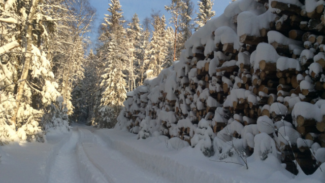 Жители Ленобласти смогут купить древесину для отопления и строительства по дешёвке