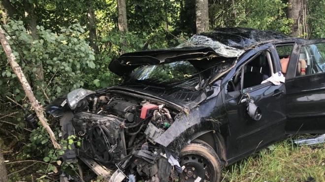 Водитель потерял кошку в результате ДТП в Тихвинском районе
