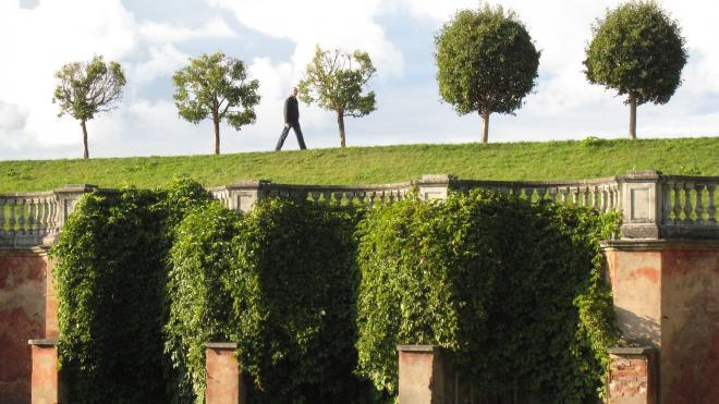 Петербург намерен выделить в 2021 году более 2 млрд руб на содержание зеленых насаждений