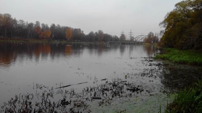 Химия или тротил: мертвая рыба в Охтинском разливе напугала петербуржцев