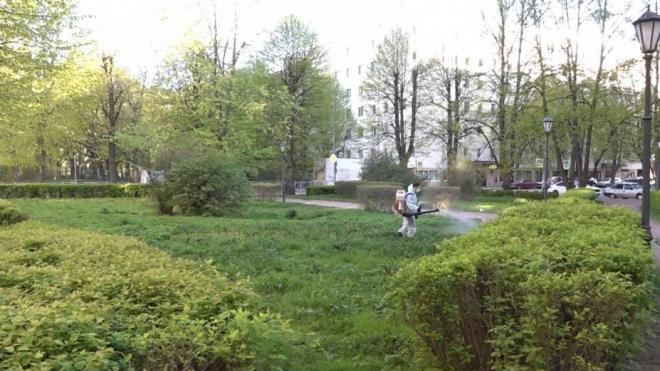В парках и скверах Выборга проходит дезинсекция против клещей