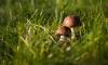 Главный синоптик Петербурга посоветовал отправиться за грибами