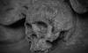 В Ломоносове строители нашли поросший мхом изуродованный череп