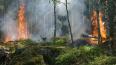Путин рассказал о возрастающих рисках паводков и пожаров
