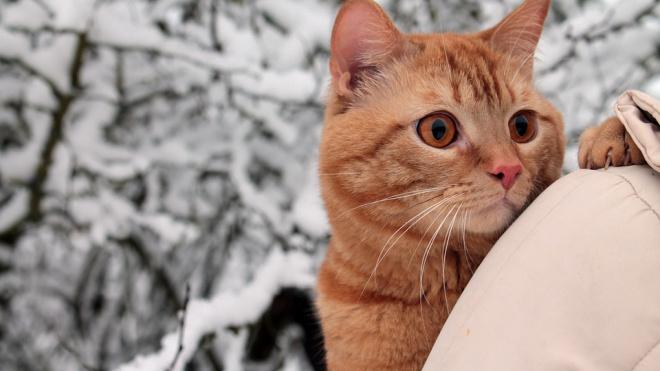 В воскресенье в Ленобласти похолодает